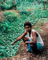 TerraCircle's Roselyn Kabu Maemouri assesses a swamp garden made as part of the Lauru Kastom Garden Project.