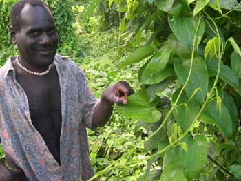 Martin, a Bouganville farmer, with a yam plant